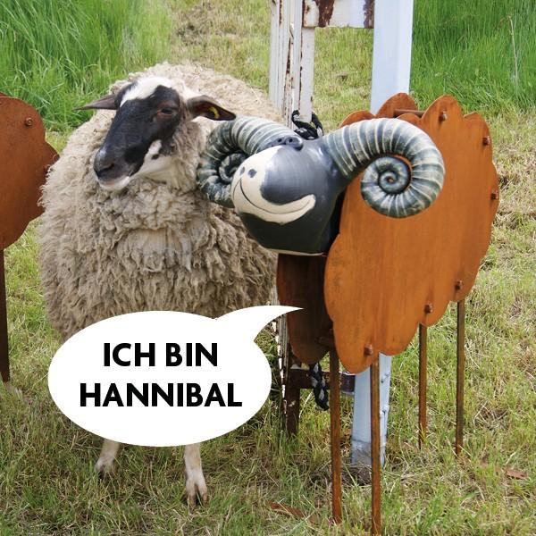 Rostschaf Hannibal