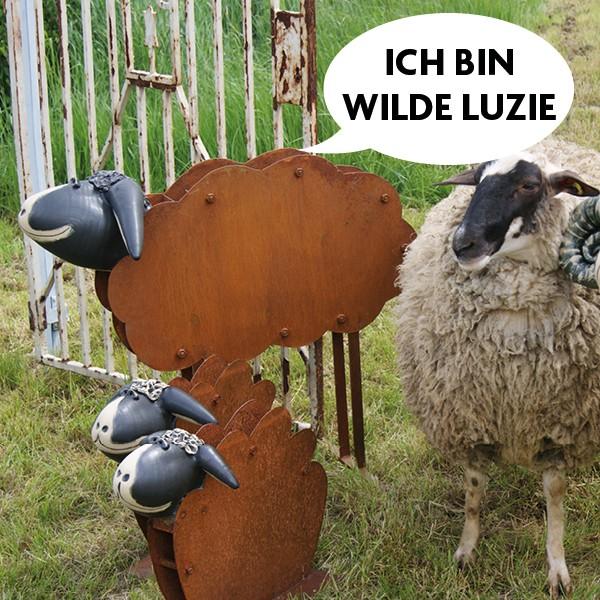 Rostschaf Wilde Luzie